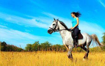 Подарок мужчине который любит лошадей заказ букетов в спб по безналу с бесплатной доставкой
