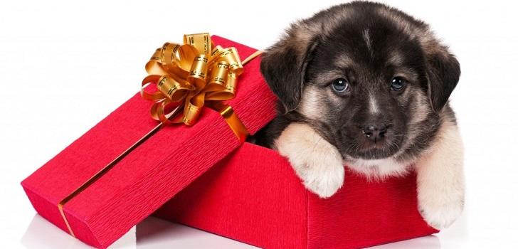 Подарок на день рождения выбрать