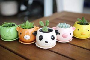 Креативные горшочки с кактусами